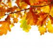Autumn Leaves — Stock Photo #11176123