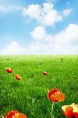 Beauty of summer nature — Stock Photo