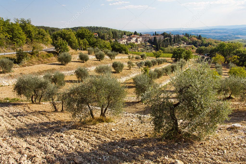 Toscana landscape with olive trees in foreground in Tuscany, Italy — Stock Photo #10738683