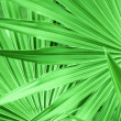 Green leaf texture - Stockfoto