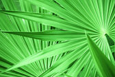 Green leaf texture — Stock Photo
