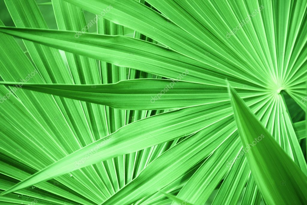 Texture of a green leaf as background  Stock Photo #11355586