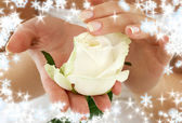 Rosebud with snowflakes — Stock Photo