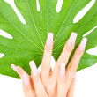 Female hands with green leaf — ストック写真