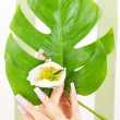Female hands with green leaf and flower - Foto Stock
