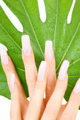 Female hands with green leaf — Stock Photo