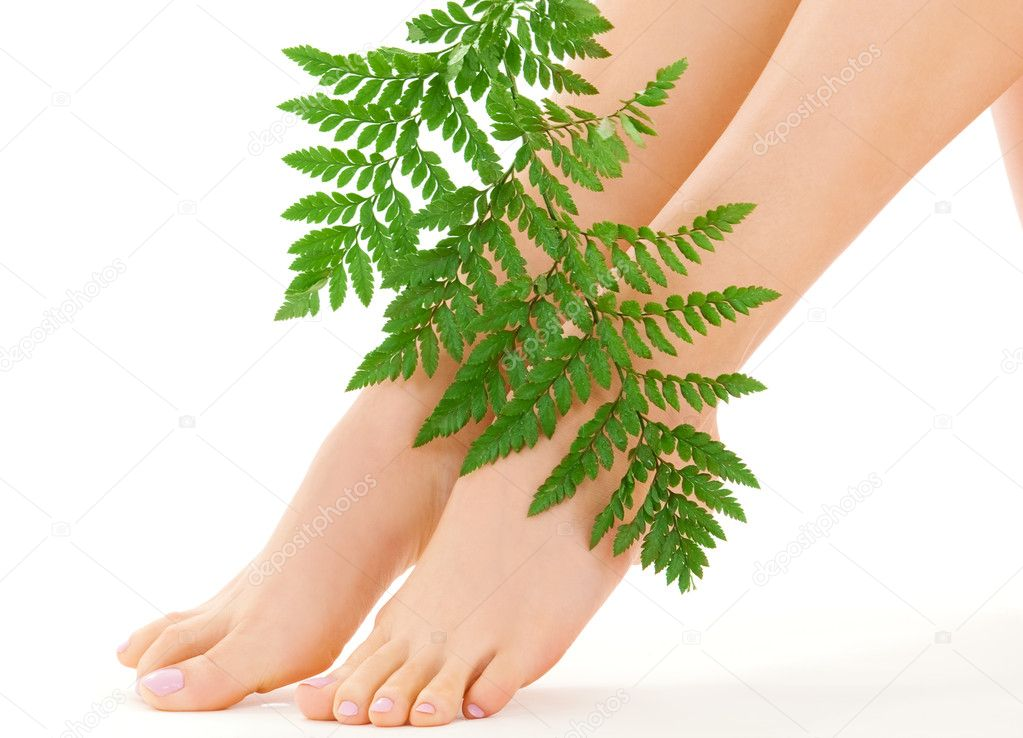 Picture of female feet with green leaf over white — Stock Photo #11773251