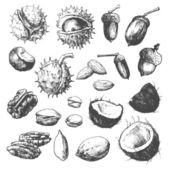 Nüsse und samen — Stockvektor