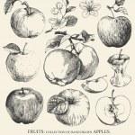 Apples. — Stock Vector