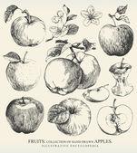 äpfel. — Stockvektor