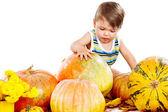 Bambino giocando con zucche — Foto Stock