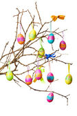 Easter branch — Stock Photo