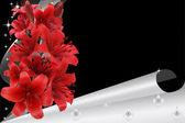 Lirio rojo — Foto de Stock