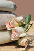 Three roses and stone — Stock Photo