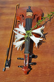 Lilies to rest upon violin — Stockfoto