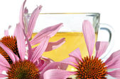 Tea with echinacea purple — Stock Photo