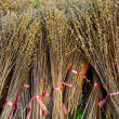 Foto Stock: Bind the Dried plant, Harvest concept