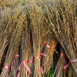 Foto de Stock  : Bind the Dried plant, Harvest concept