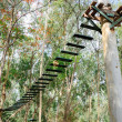 Air bridge on tree canopy — Stock Photo