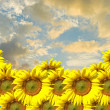 Sunflower with sunset sky — Stock Photo