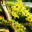 Stock Photo: Nice yellow orchid, Thailand