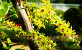 Nice yellow orchid, Thailand — Stock Photo