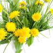 Dandelion — Stock Photo #10909605