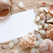 图库照片: Seashells with sand