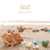 Seashells on a Beach — Stock Photo