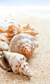 Seashells on a Beach — Stock Photo