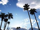 Palmeras con cielo azul y las nubes — Foto de Stock