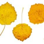 Three yellow autumn leaves — Stock Photo #11117933