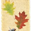 Foto de Stock  : Illustration with leaves and old Letter