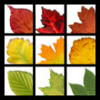 Stock Photo: Mosaic with nine colored leaves