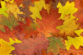 Colorful tree leaves — Stock Photo
