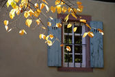 Autumn leaves in front of an old window — Stock Photo