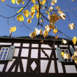 Herbstbltter vor altem Fachwerkhaus -  