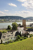 Ruedesheim in the Rheingau — Stock Photo
