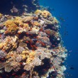 Edge of coral reef — Stock Photo #10959346