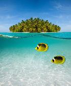 Palm island and underwater world — Stock Photo
