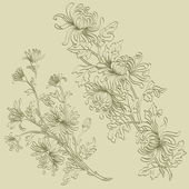 Sprigs of chrysanthemum — Stock Vector
