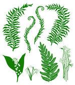 Plantas del bosque — Vector de stock