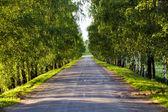 Route goudronnée — Photo