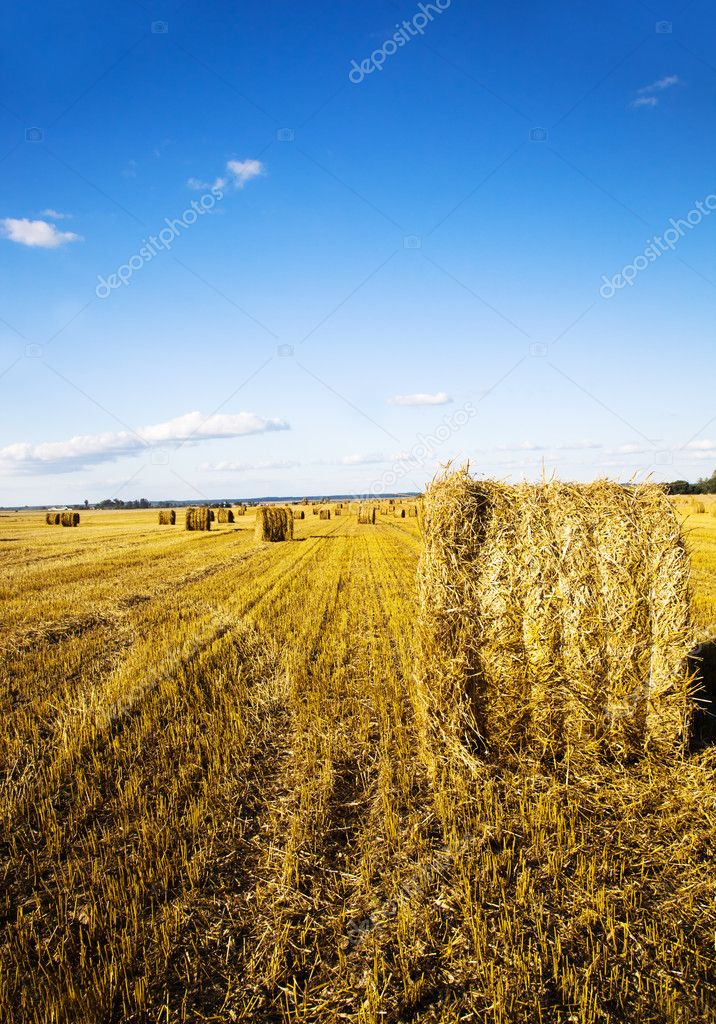Agricultural field on which passes harvest cereals — Stock Photo #11329438