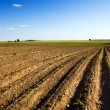Stock Photo: Field is plowed
