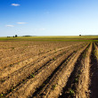 Field is plowed — Stock Photo