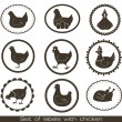 Set of labels with chicken. - Stock Vector