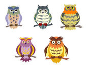 Color cartoon owls — Stock Vector
