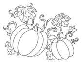 Pumpkins harvest — Stock Vector