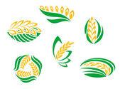 Símbolos de las plantas de cereales — Vector de stock